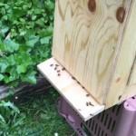 Bienen 2